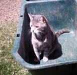 kitty, Peanut, in the garden
