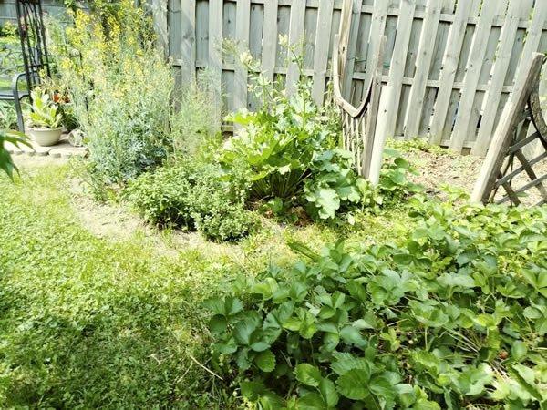 Hummingbird Creations Garden herbs